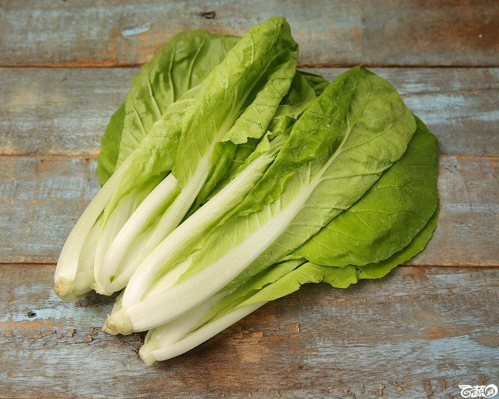 小白菜1.jpg