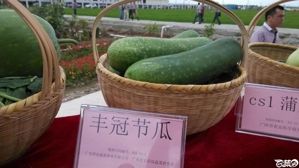 广东农科院蔬菜研究所丰冠节瓜_002.jpg
