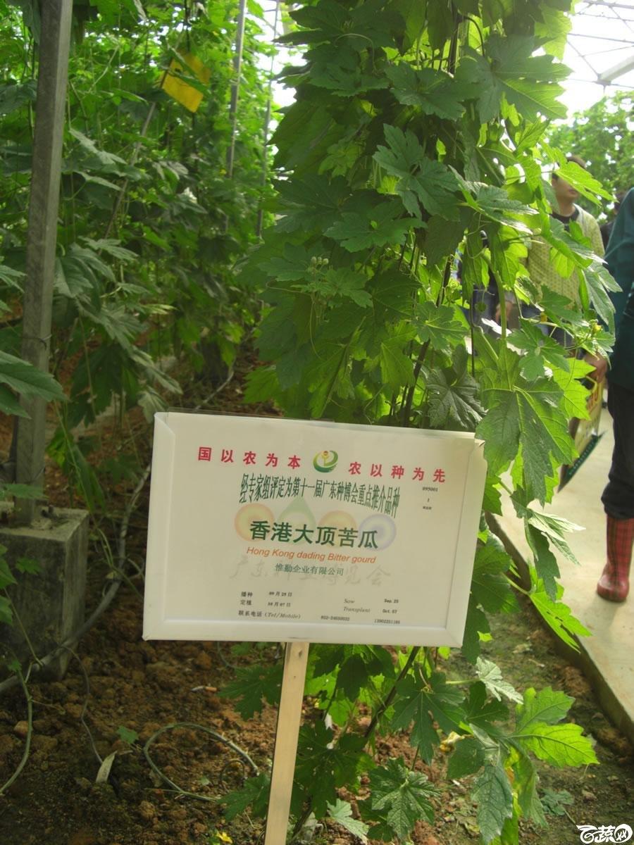 香港惟勤公司香港大顶苦瓜2012年在第11届广东种业博览会上表现抢眼_007.jpg