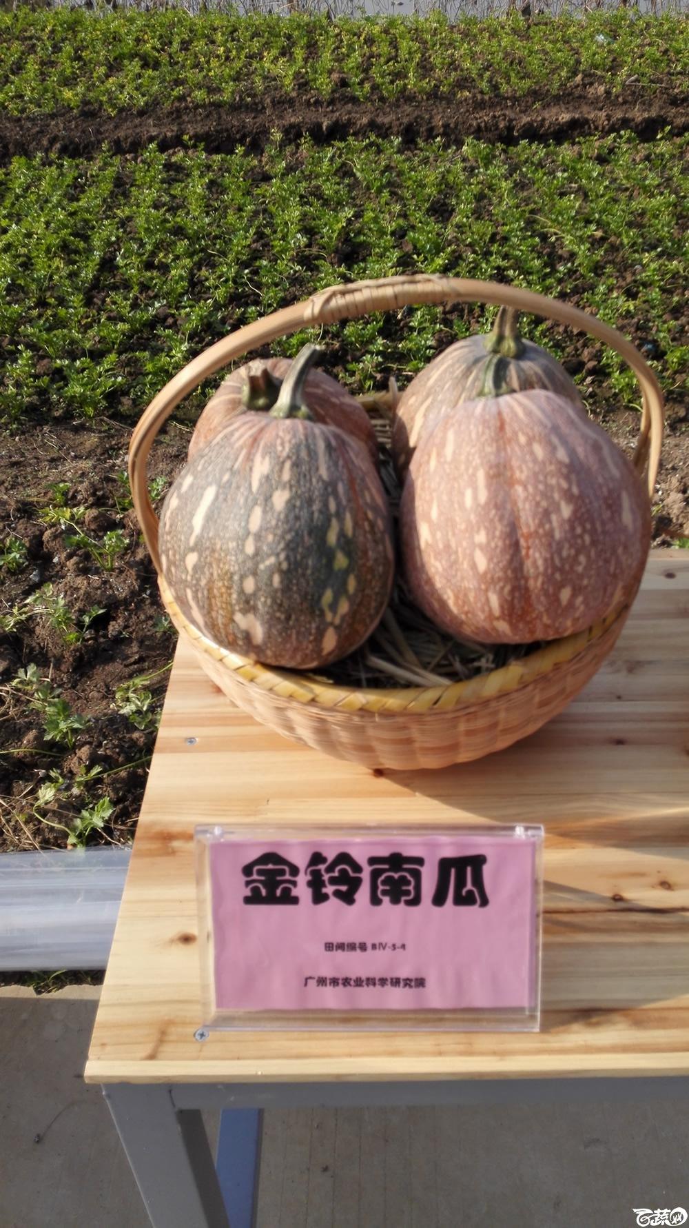 2014年12月10号广州市农科院南沙秋季蔬菜新品种展示会_瓜类_001.jpg