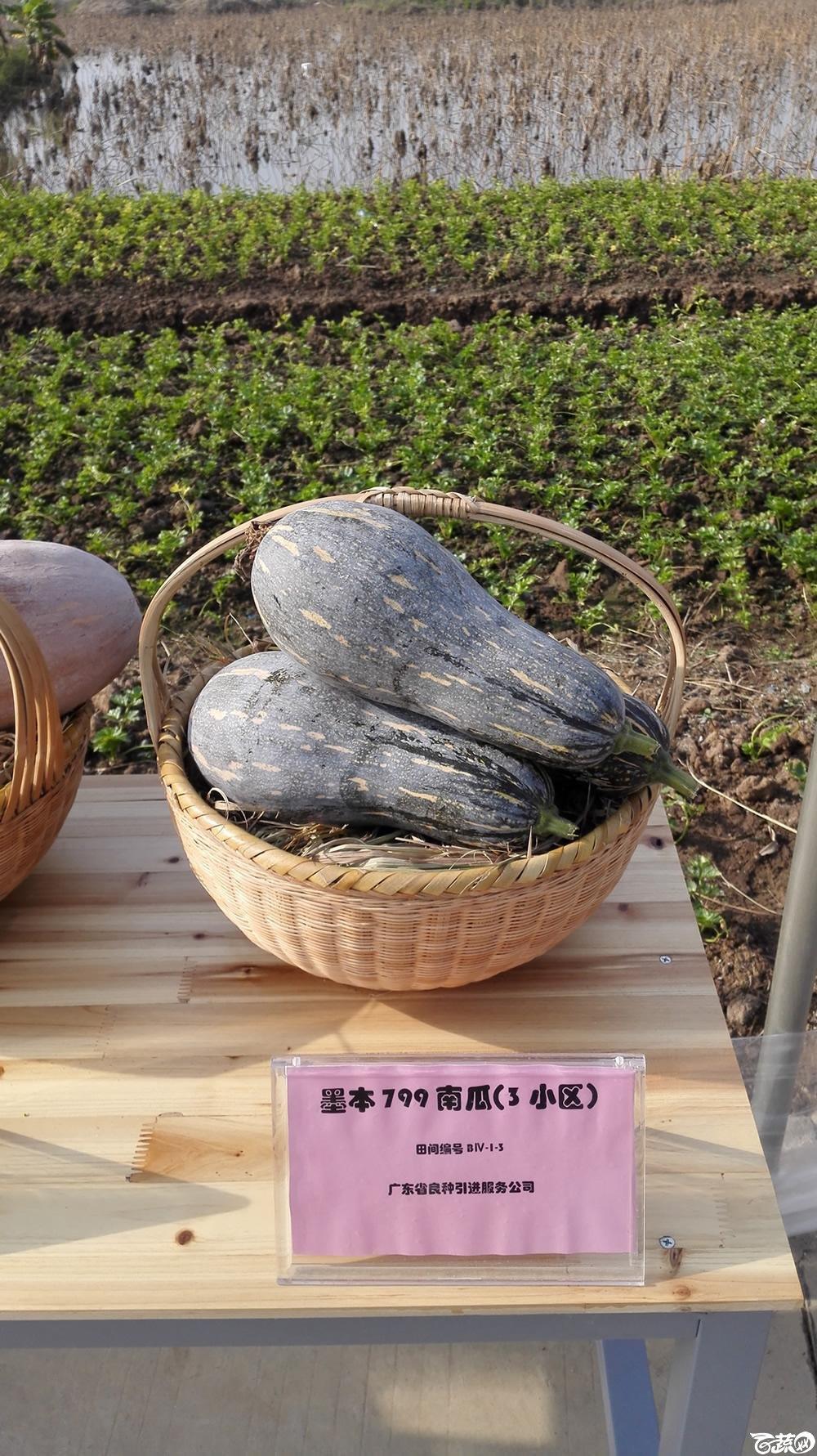 2014年12月10号广州市农科院南沙秋季蔬菜新品种展示会_瓜类_007.jpg