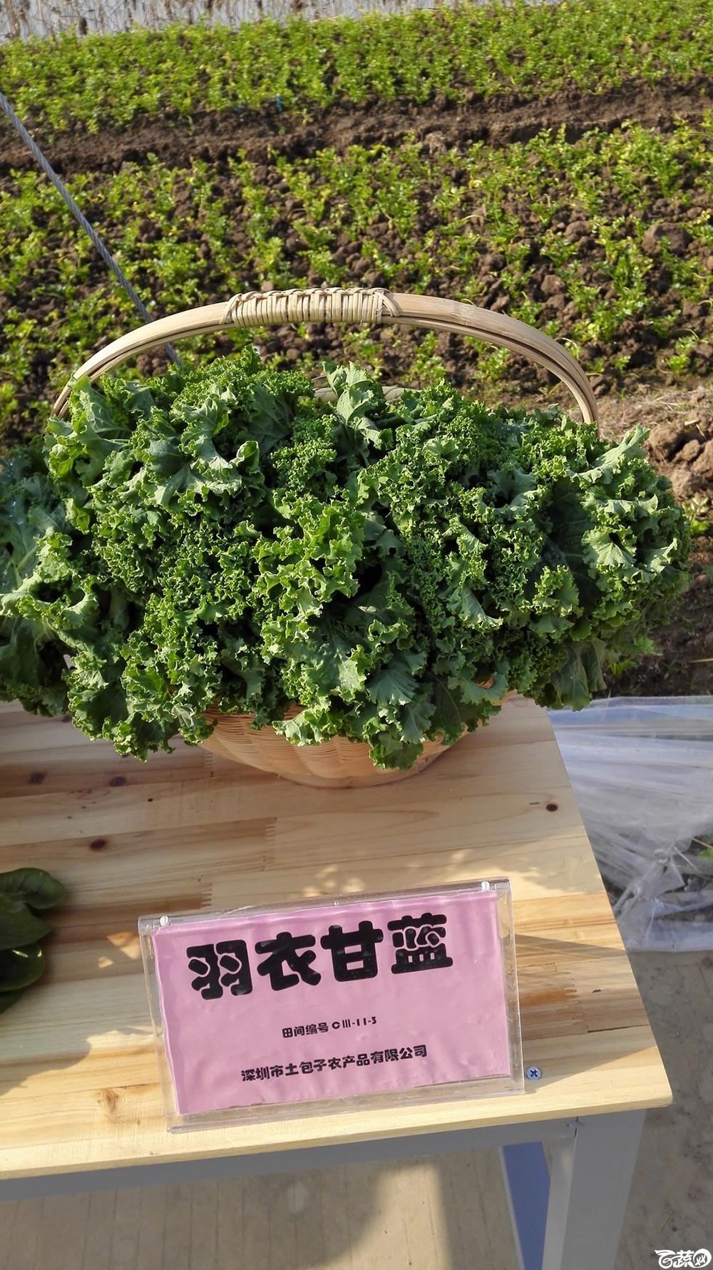 2014年12月10号广州市农科院南沙秋季蔬菜新品种展示会_叶菜_011.jpg