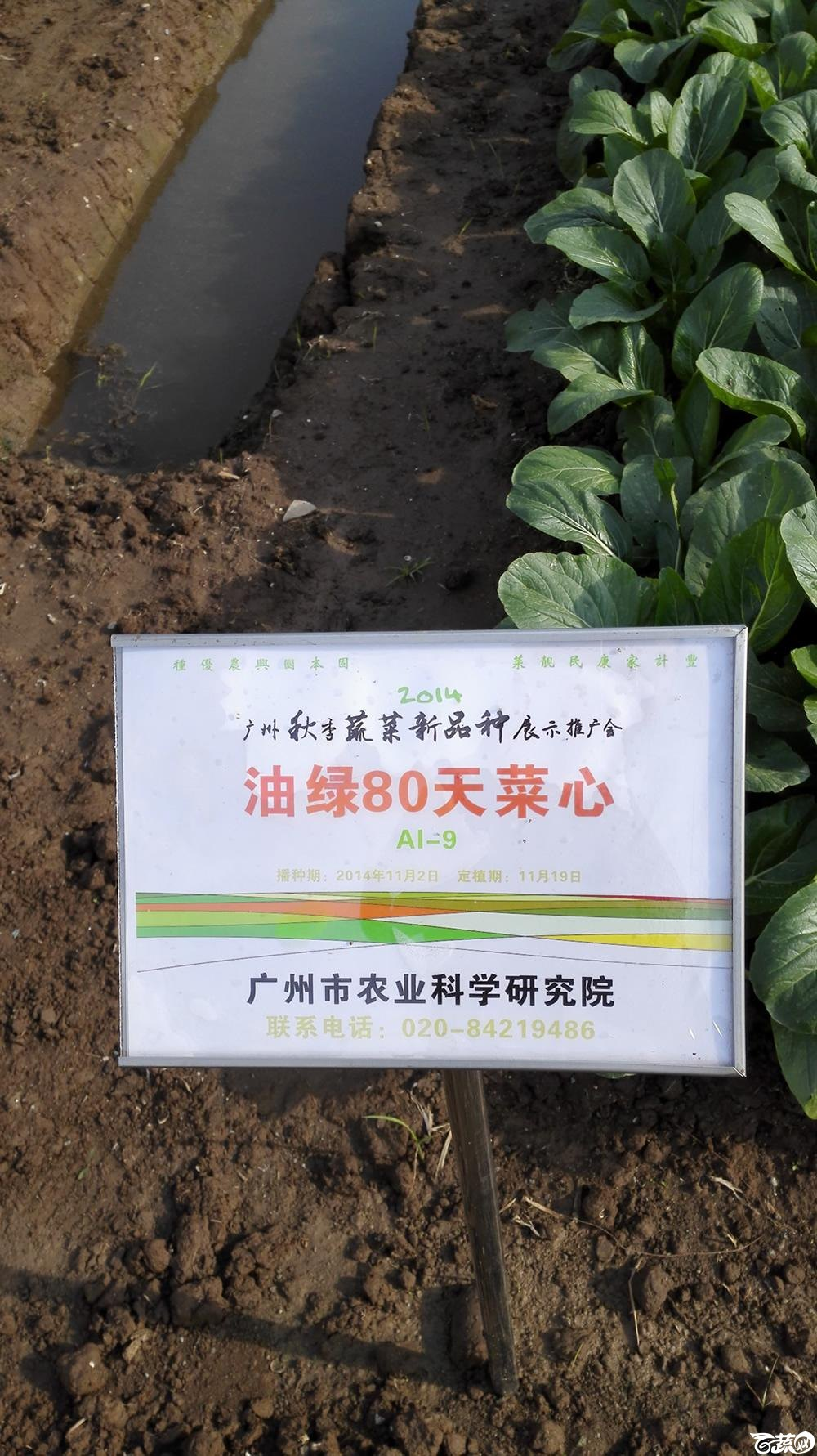 2014年12月10号广州市农科院南沙秋季蔬菜新品种展示会_叶菜_044.jpg