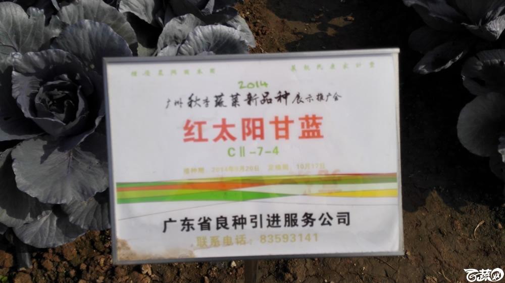 2014年12月10号广州市农科院南沙秋季蔬菜新品种展示会 甘蓝_086.jpg