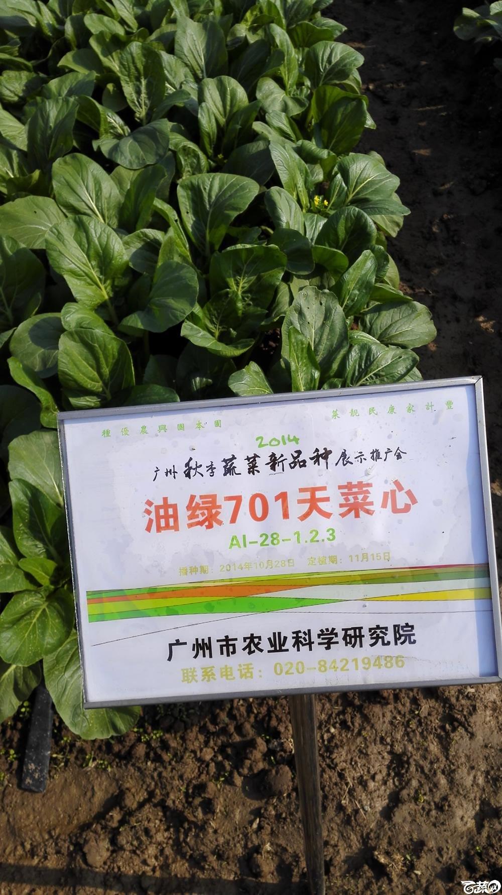2014年12月10号广州市农科院南沙秋季蔬菜新品种展示会_叶菜_091.jpg