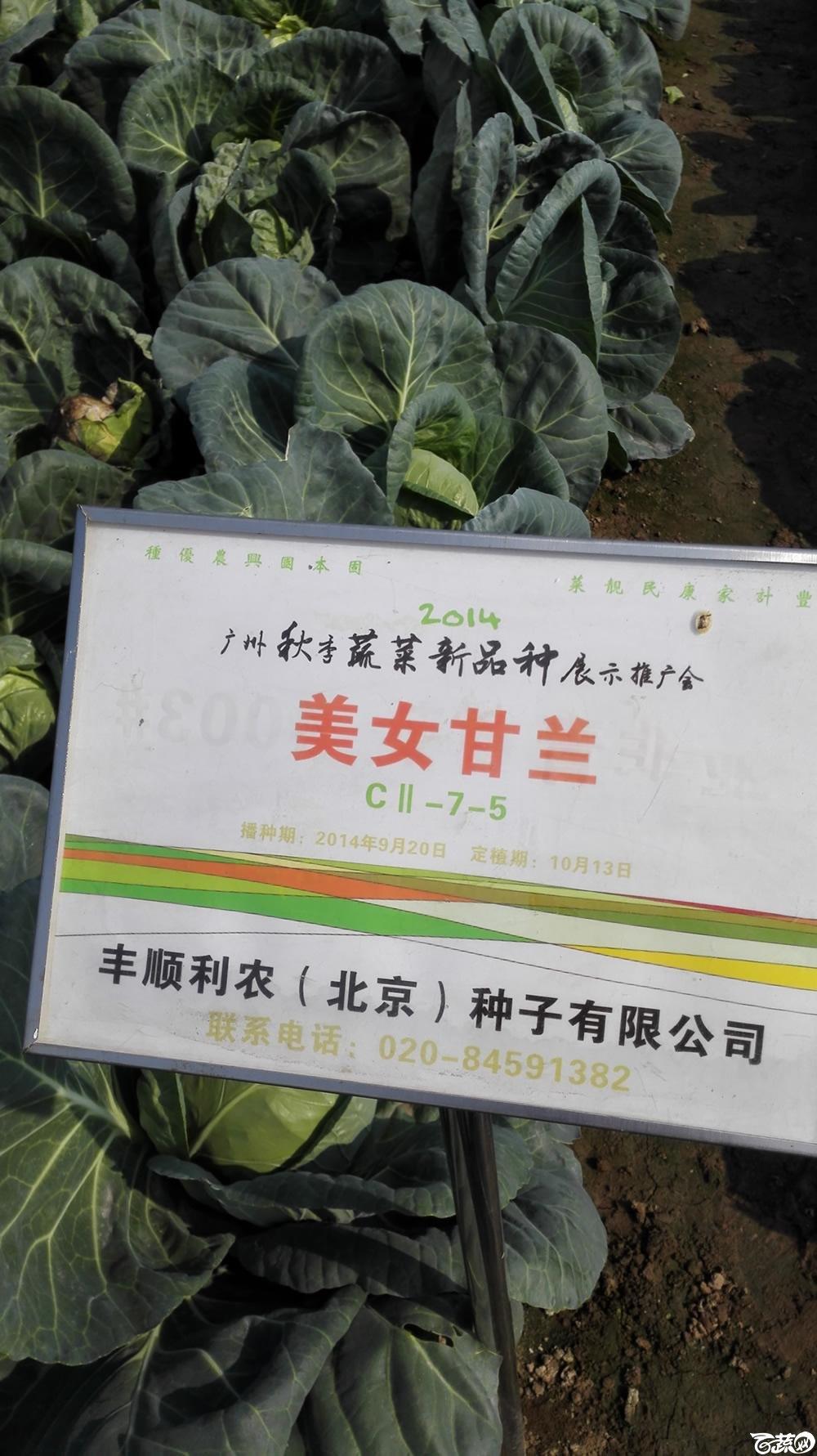 2014年12月10号广州市农科院南沙秋季蔬菜新品种展示会 甘蓝_095.jpg