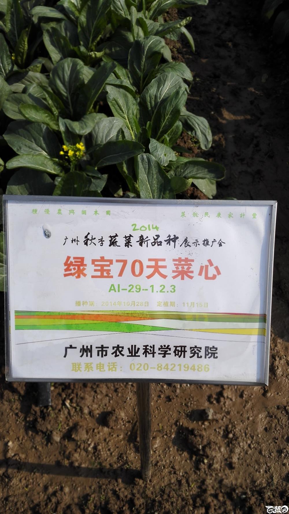 2014年12月10号广州市农科院南沙秋季蔬菜新品种展示会_叶菜_098.jpg