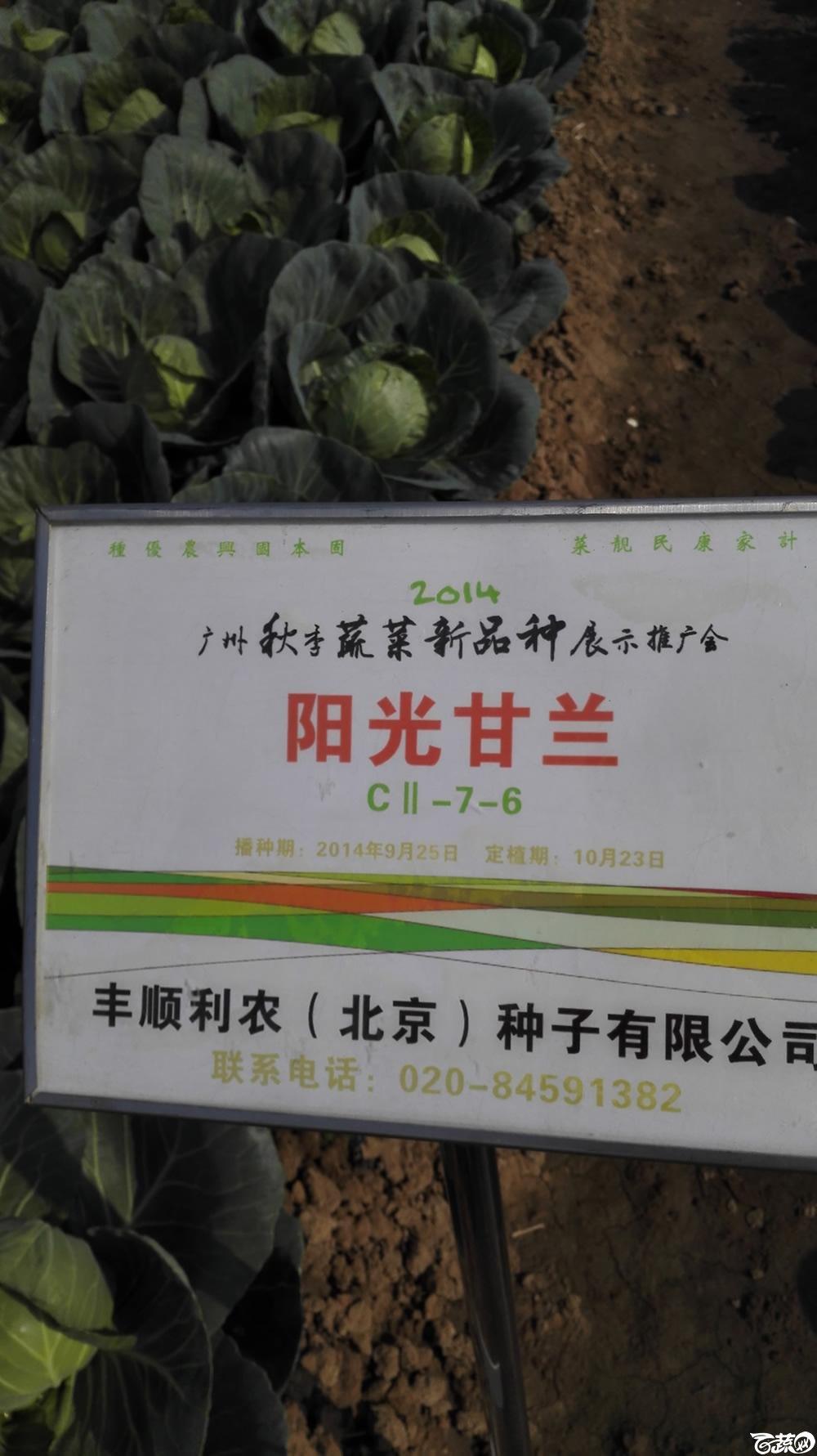 2014年12月10号广州市农科院南沙秋季蔬菜新品种展示会 甘蓝_100.jpg