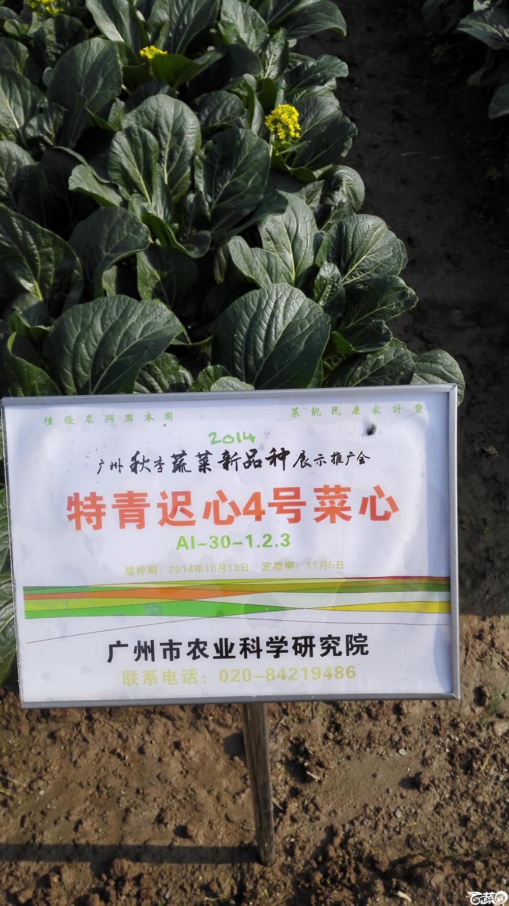2014年12月10号广州市农科院南沙秋季蔬菜新品种展示会_叶菜_105.jpg