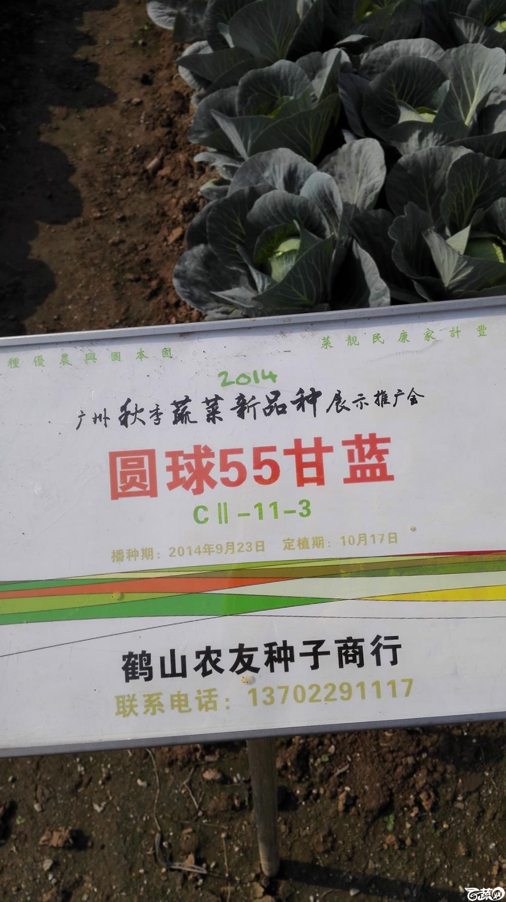 2014年12月10号广州市农科院南沙秋季蔬菜新品种展示会 甘蓝_111.jpg