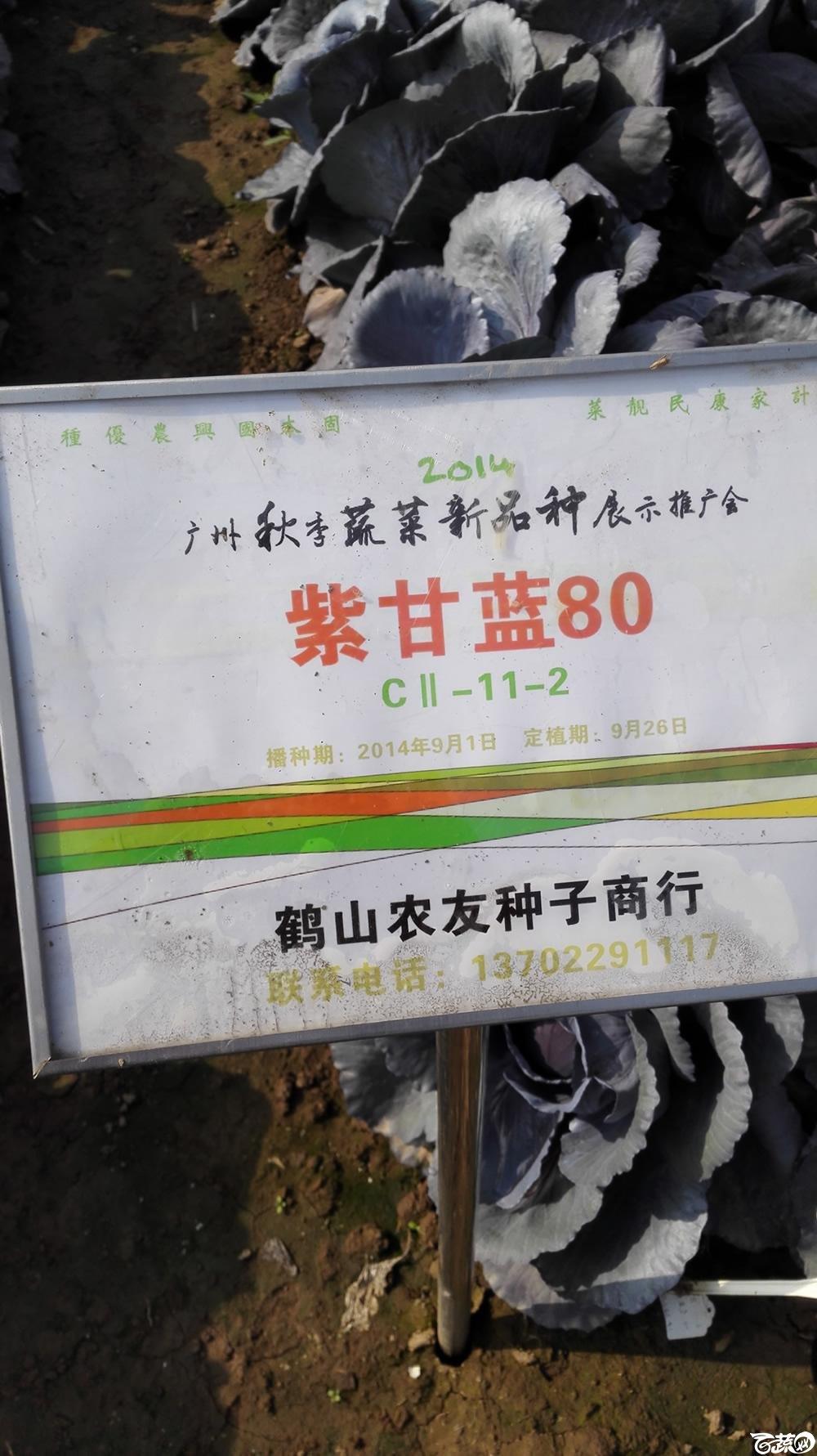 2014年12月10号广州市农科院南沙秋季蔬菜新品种展示会 甘蓝_118.jpg