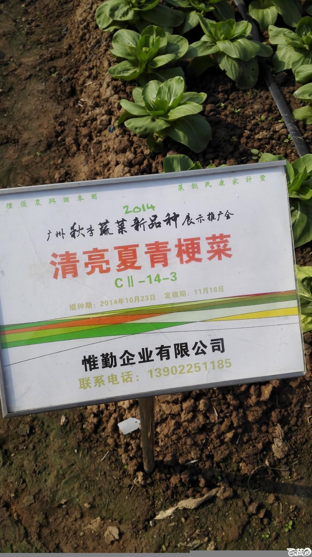 2014年12月10号广州市农科院南沙秋季蔬菜新品种展示会_叶菜_120.jpg