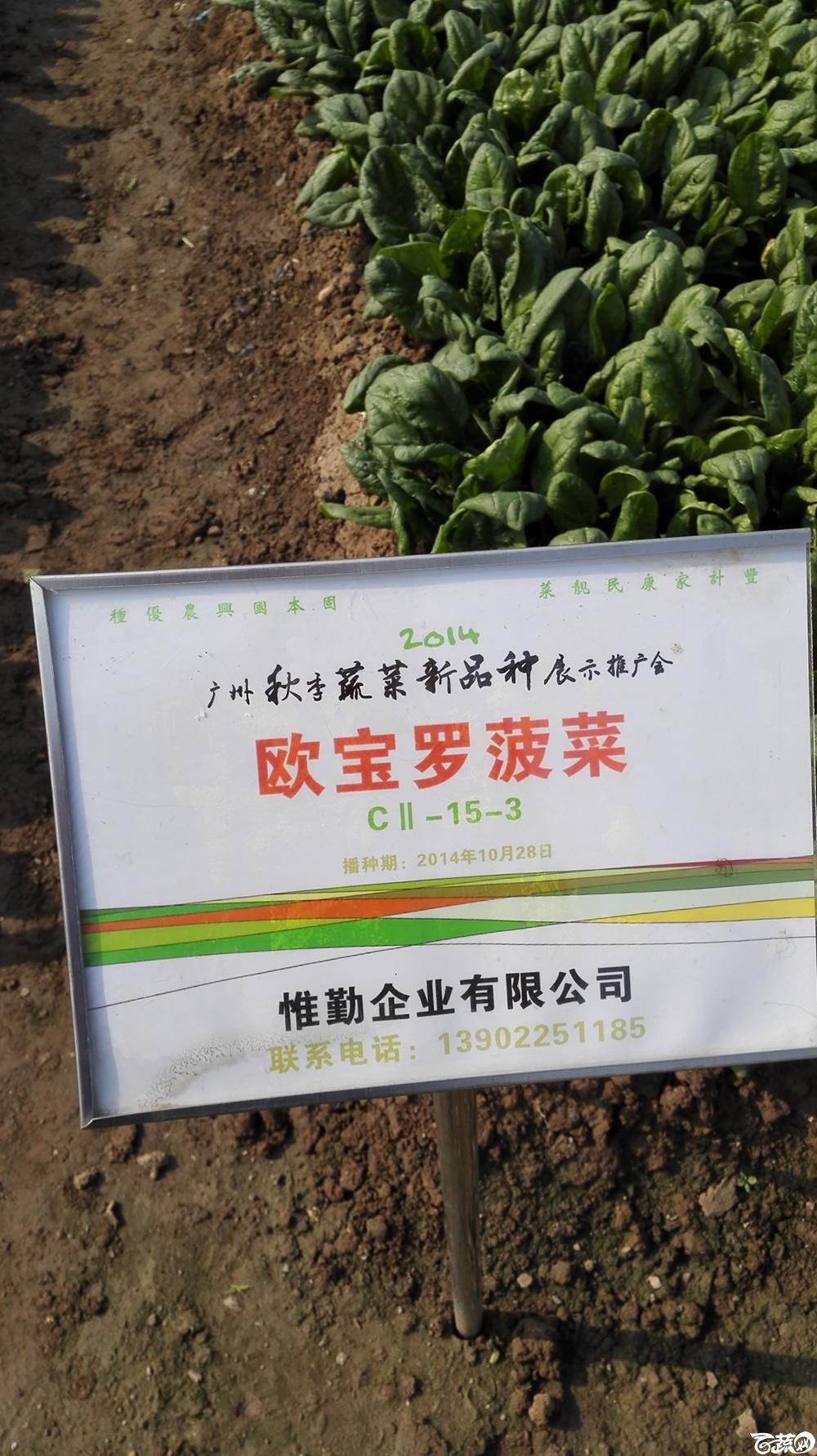 2014年12月10号广州市农科院南沙秋季蔬菜新品种展示会_叶菜_136.jpg