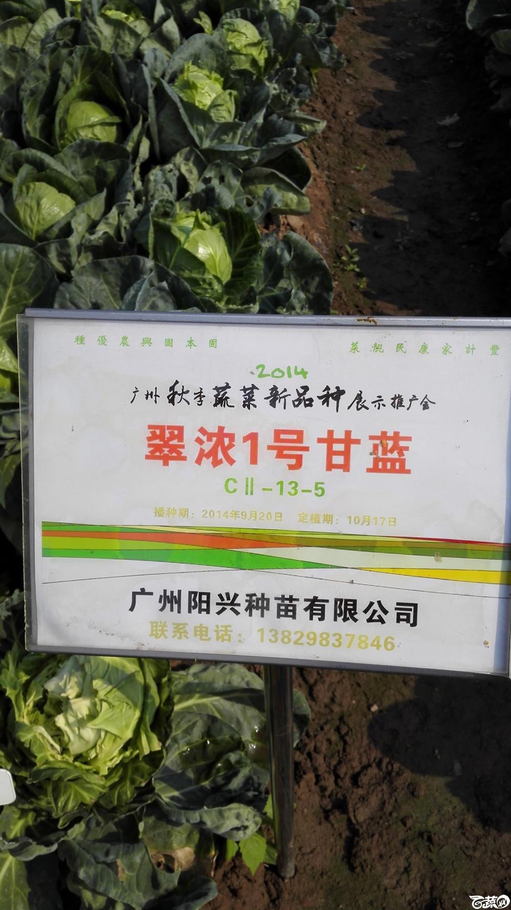 2014年12月10号广州市农科院南沙秋季蔬菜新品种展示会 甘蓝_148.jpg