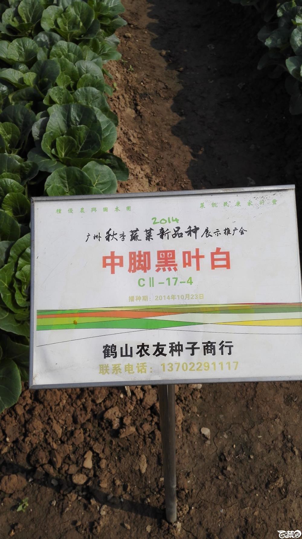 2014年12月10号广州市农科院南沙秋季蔬菜新品种展示会_叶菜_151.jpg