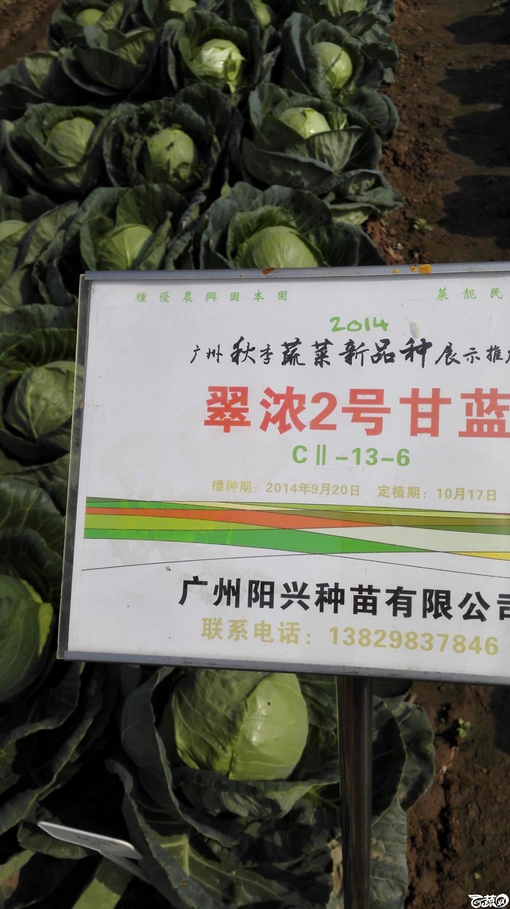 2014年12月10号广州市农科院南沙秋季蔬菜新品种展示会 甘蓝_152.jpg