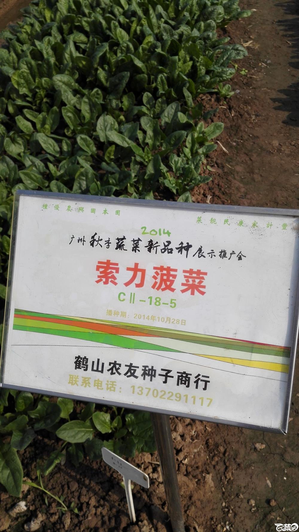 2014年12月10号广州市农科院南沙秋季蔬菜新品种展示会_叶菜_175.jpg