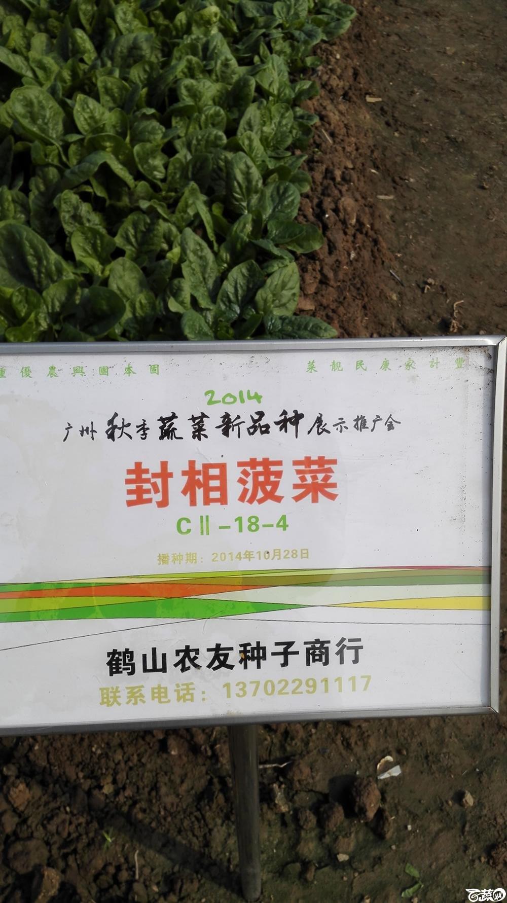 2014年12月10号广州市农科院南沙秋季蔬菜新品种展示会_叶菜_179.jpg