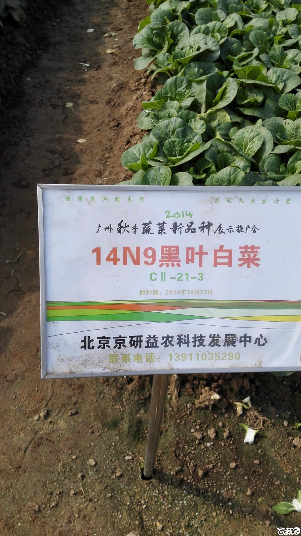 2014年12月10号广州市农科院南沙秋季蔬菜新品种展示会_叶菜_183.jpg