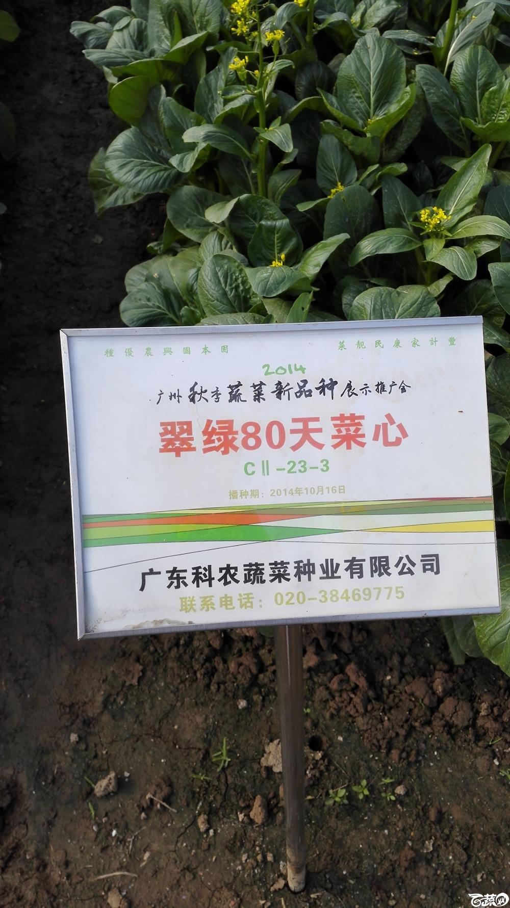 2014年12月10号广州市农科院南沙秋季蔬菜新品种展示会_叶菜_198.jpg