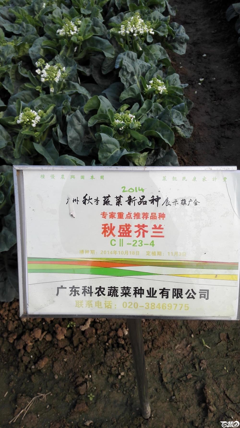 2014年12月10号广州市农科院南沙秋季蔬菜新品种展示会_叶菜_204.jpg