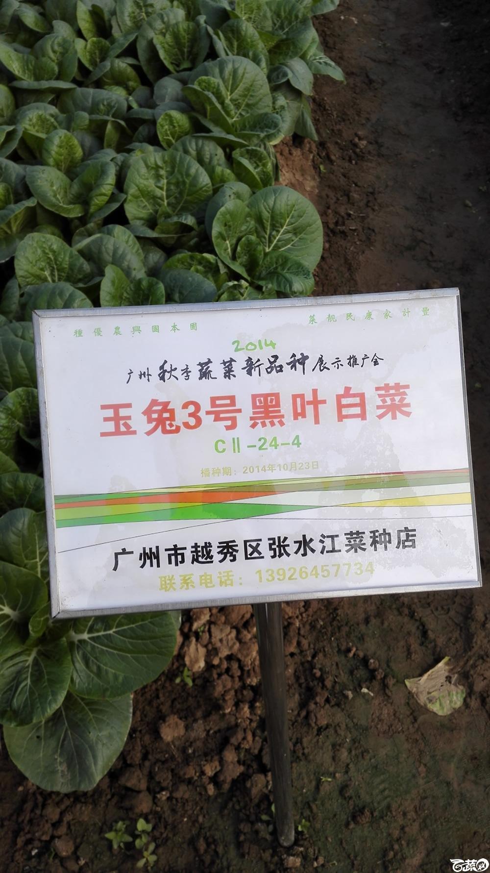 2014年12月10号广州市农科院南沙秋季蔬菜新品种展示会_叶菜_214.jpg