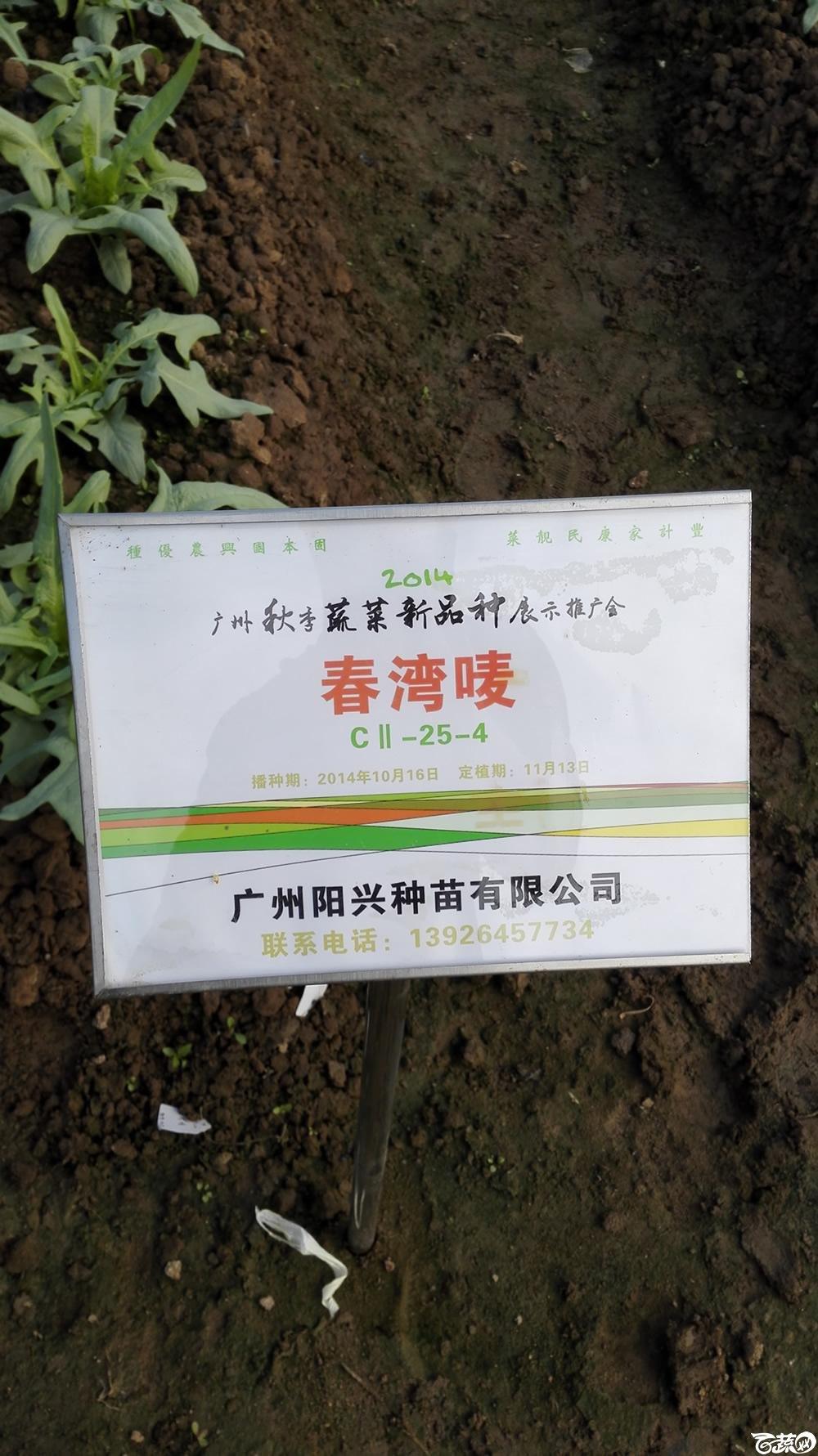 2014年12月10号广州市农科院南沙秋季蔬菜新品种展示会_叶菜_226.jpg