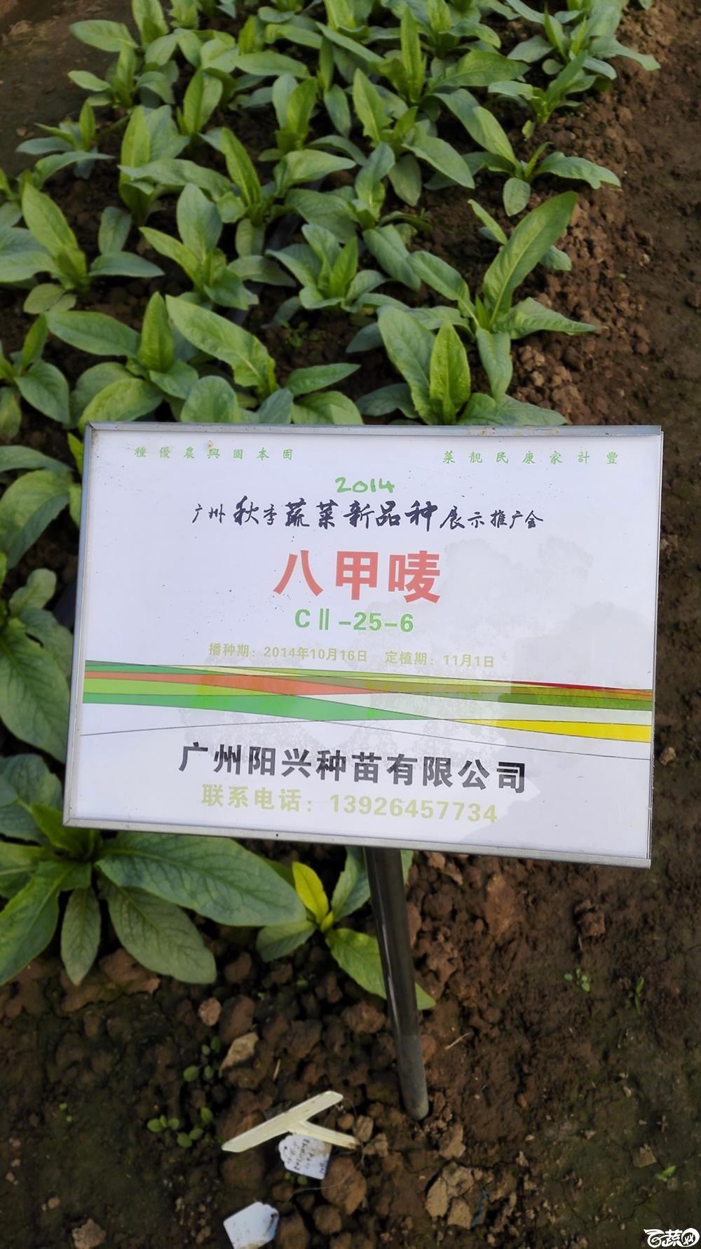 2014年12月10号广州市农科院南沙秋季蔬菜新品种展示会_叶菜_235.jpg