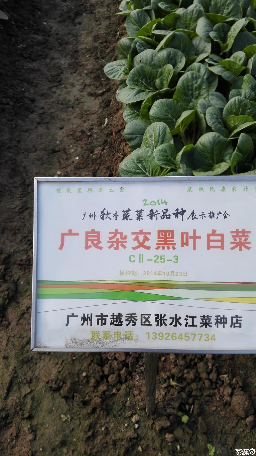 2014年12月10号广州市农科院南沙秋季蔬菜新品种展示会_叶菜_242.jpg