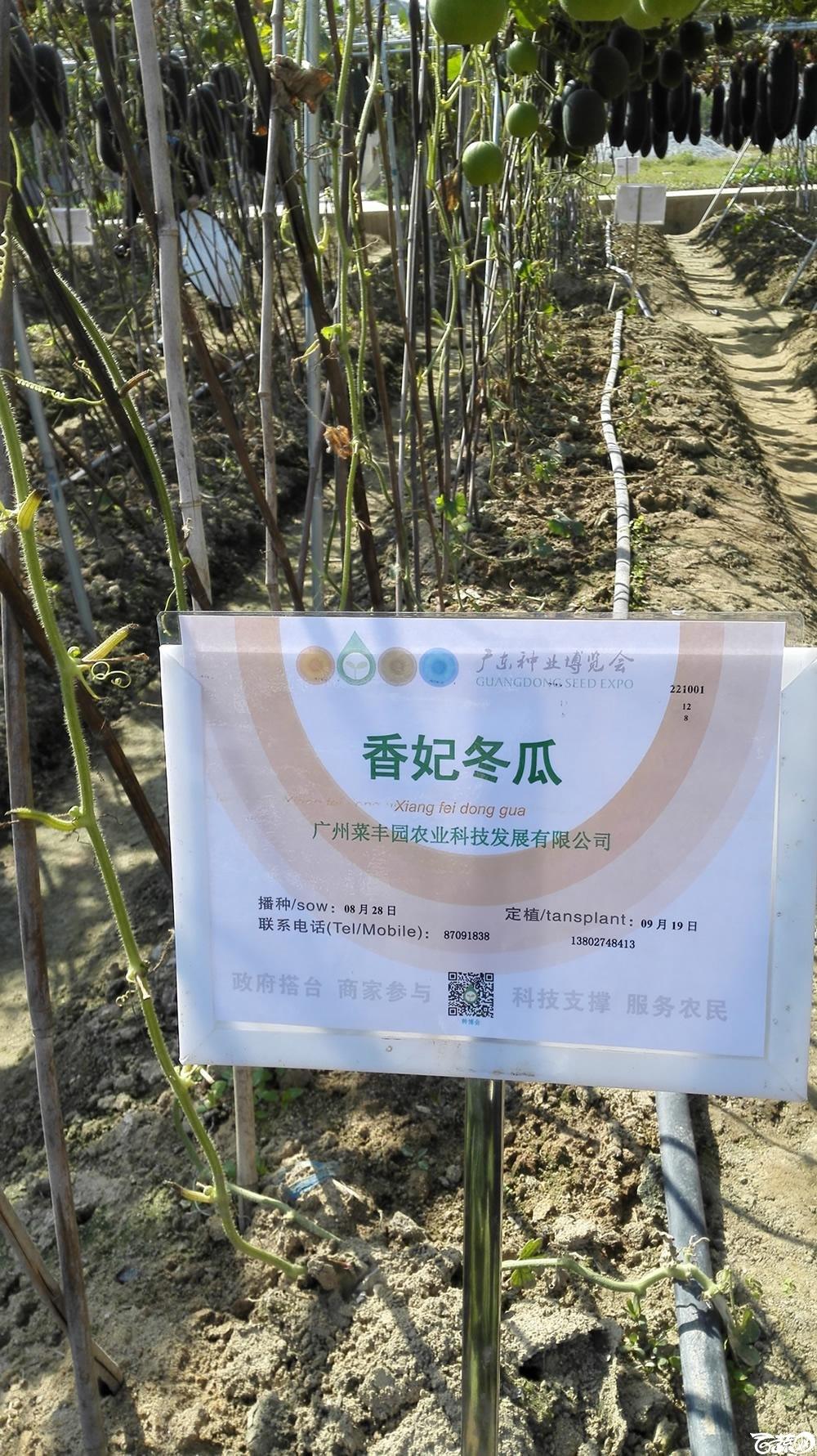2014年12月12号广东种博会_瓜类_104.jpg