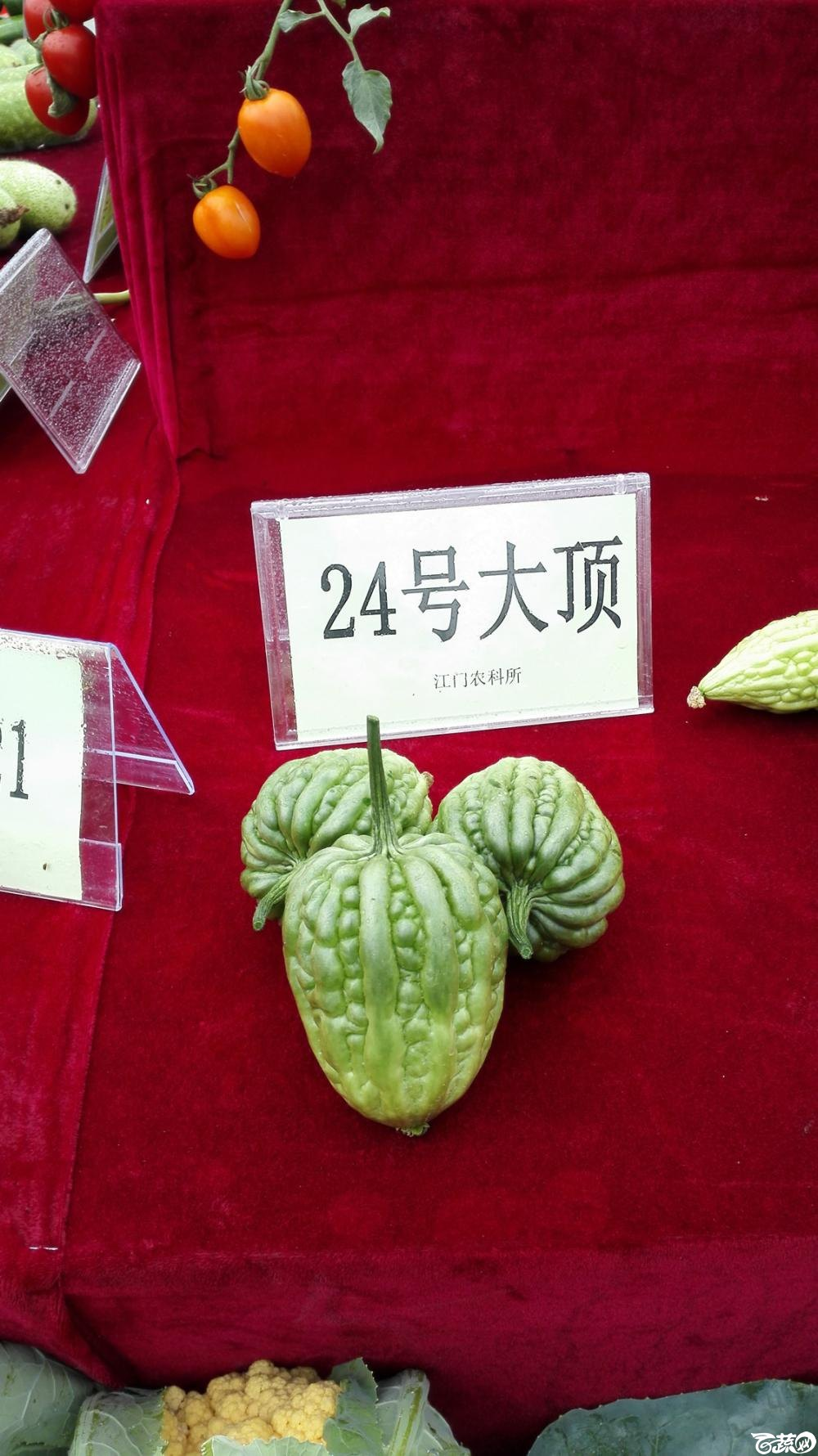 2014年12月8号中山蔬菜新品种展示会_瓜类_001.jpg