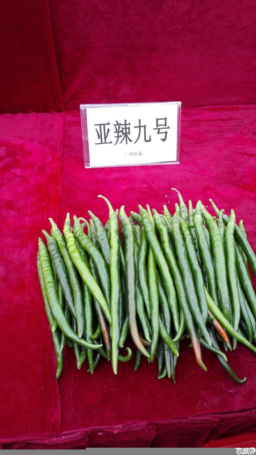 2014年12月8号中山蔬菜新品种展示会_辣椒_001.jpg