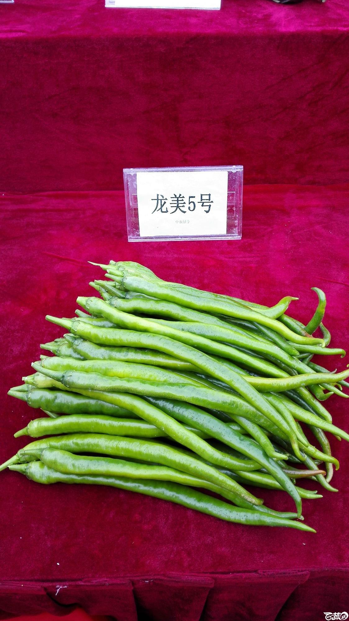2014年12月8号中山蔬菜新品种展示会_辣椒_002.jpg