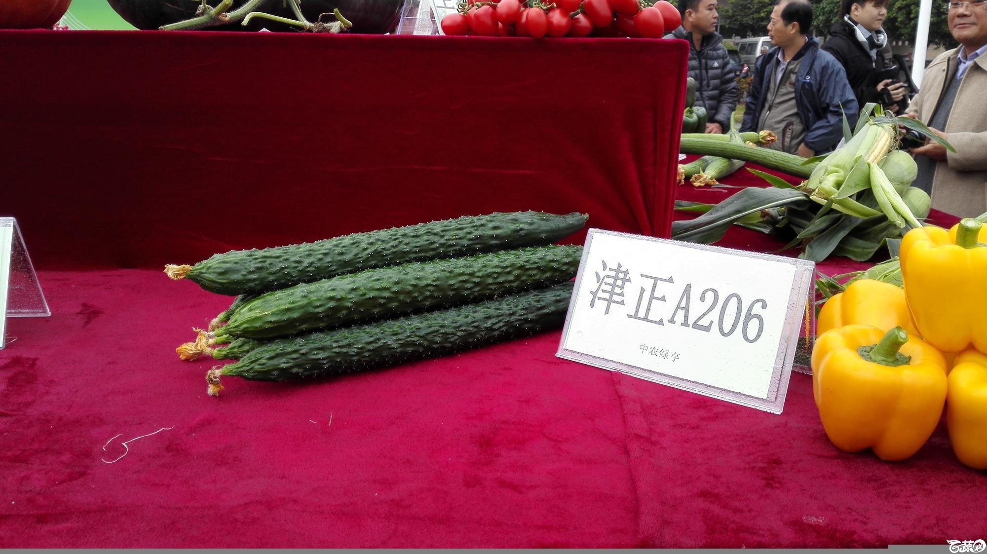 2014年12月8号中山蔬菜新品种展示会_瓜类_003.jpg