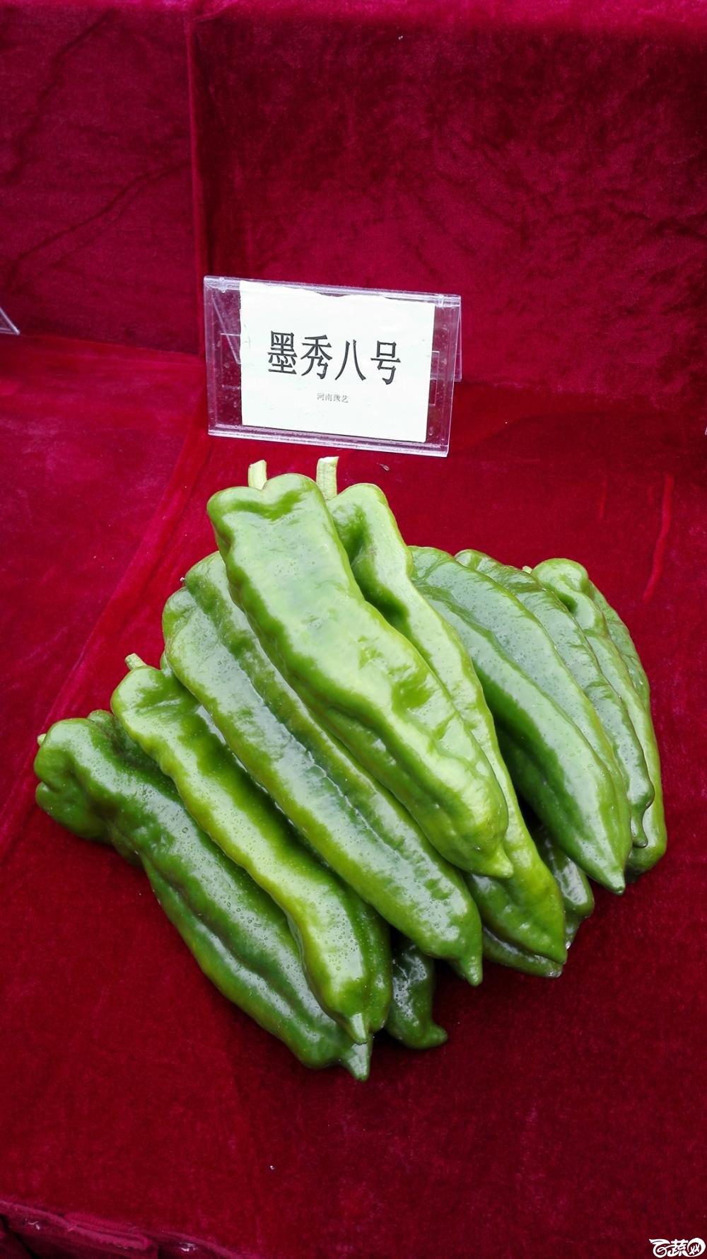 2014年12月8号中山蔬菜新品种展示会_辣椒_004.jpg