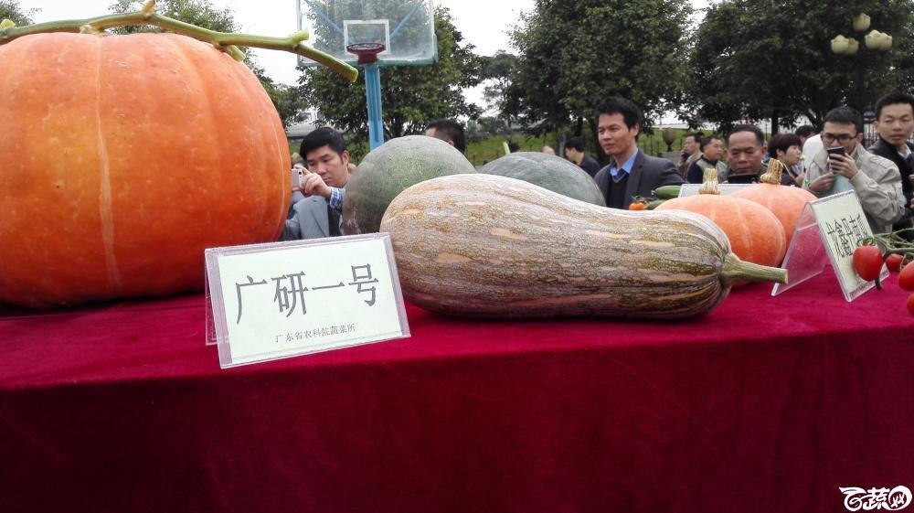 2014年12月8号中山蔬菜新品种展示会_瓜类_004.jpg