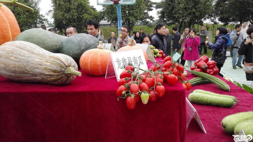 2014年12月8号中山蔬菜新品种展示会_瓜类_005.jpg