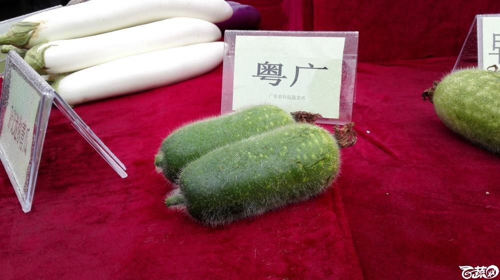 2014年12月8号中山蔬菜新品种展示会_瓜类_006.jpg