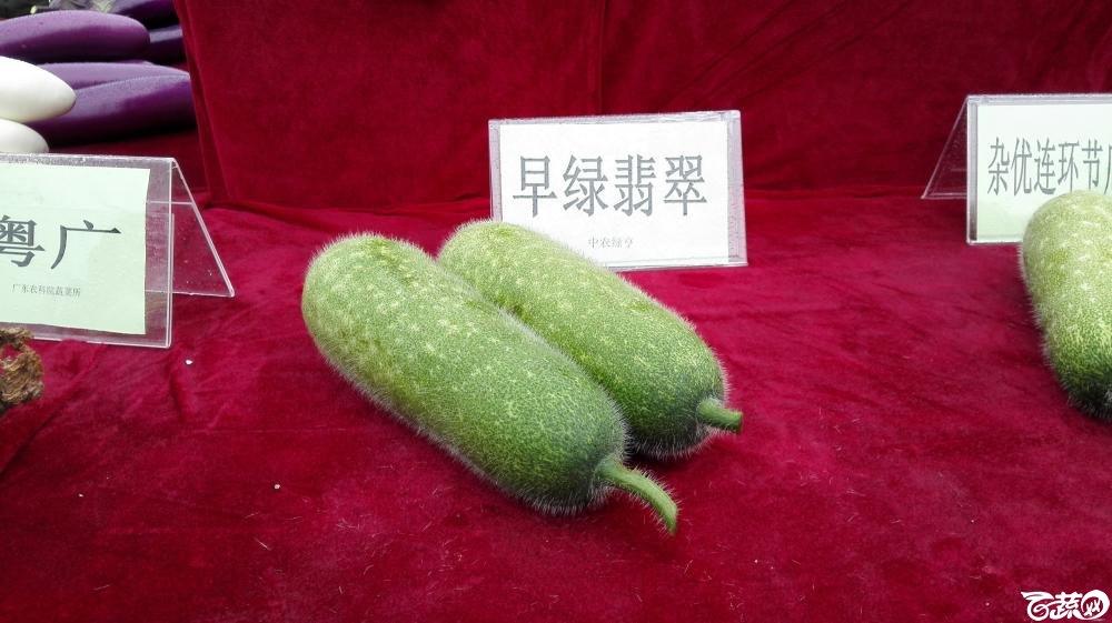 2014年12月8号中山蔬菜新品种展示会_瓜类_007.jpg
