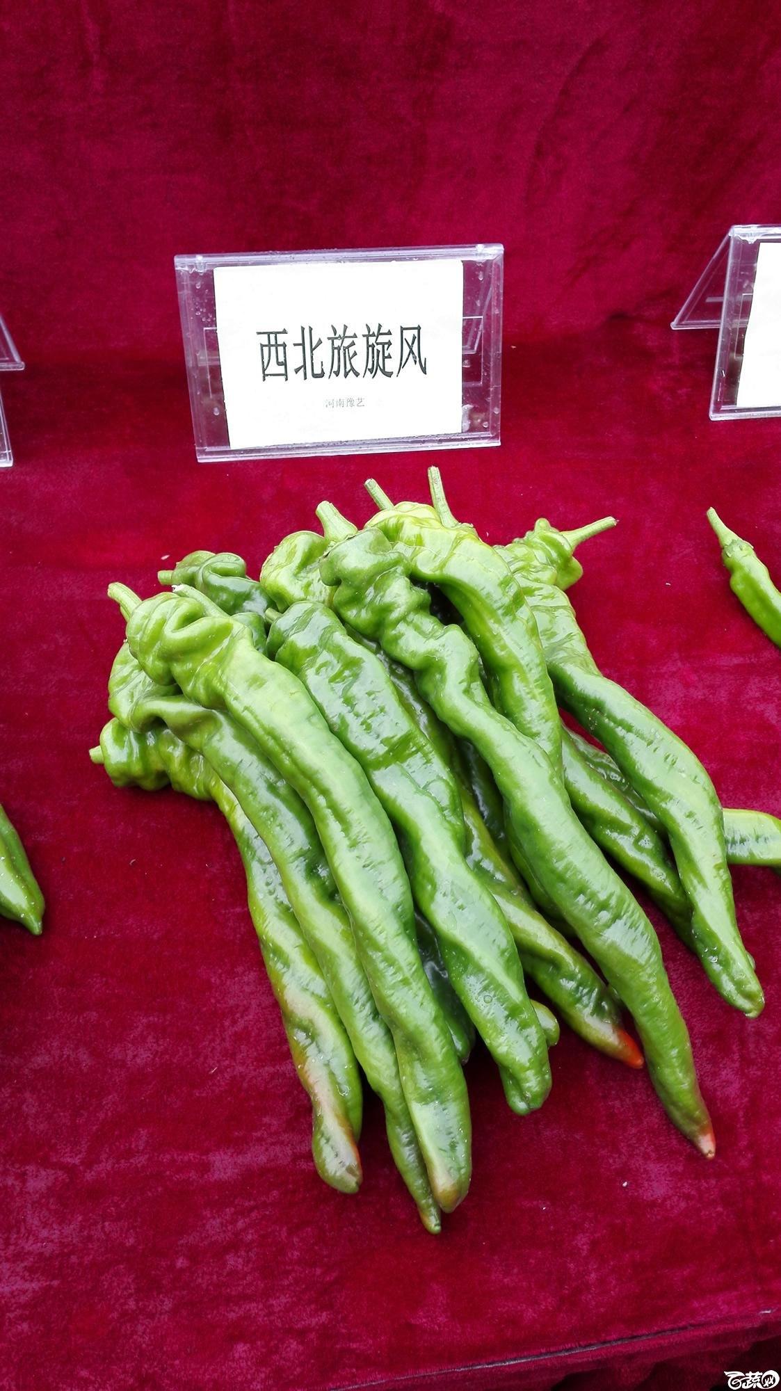 2014年12月8号中山蔬菜新品种展示会_辣椒_007.jpg