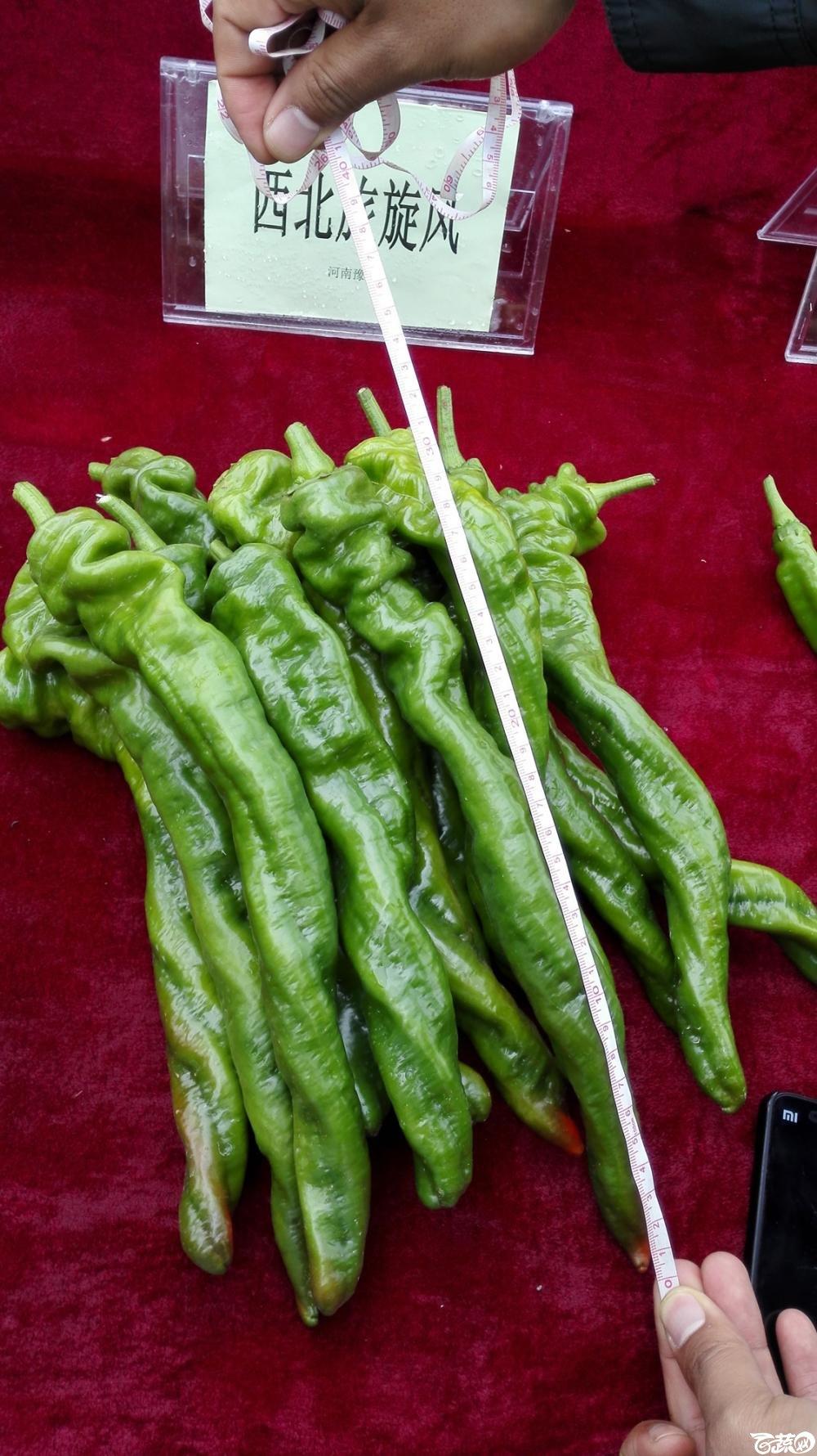 2014年12月8号中山蔬菜新品种展示会_辣椒_008.jpg