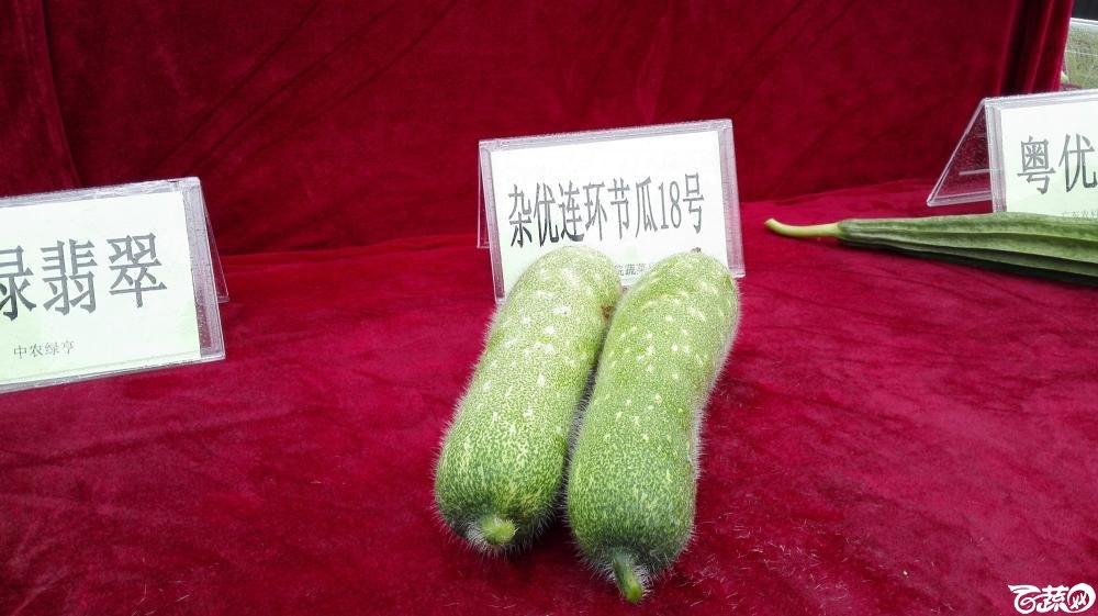 2014年12月8号中山蔬菜新品种展示会_瓜类_008.jpg