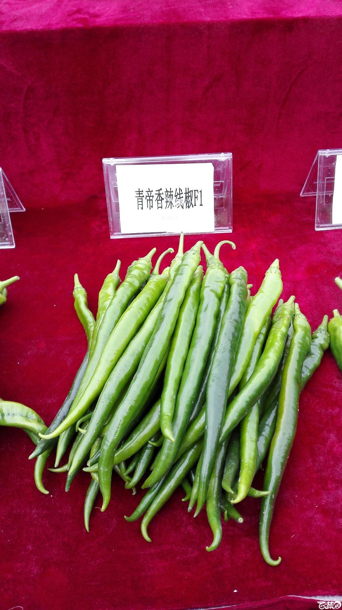 2014年12月8号中山蔬菜新品种展示会_辣椒_009.jpg