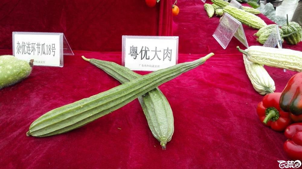 2014年12月8号中山蔬菜新品种展示会_瓜类_009.jpg