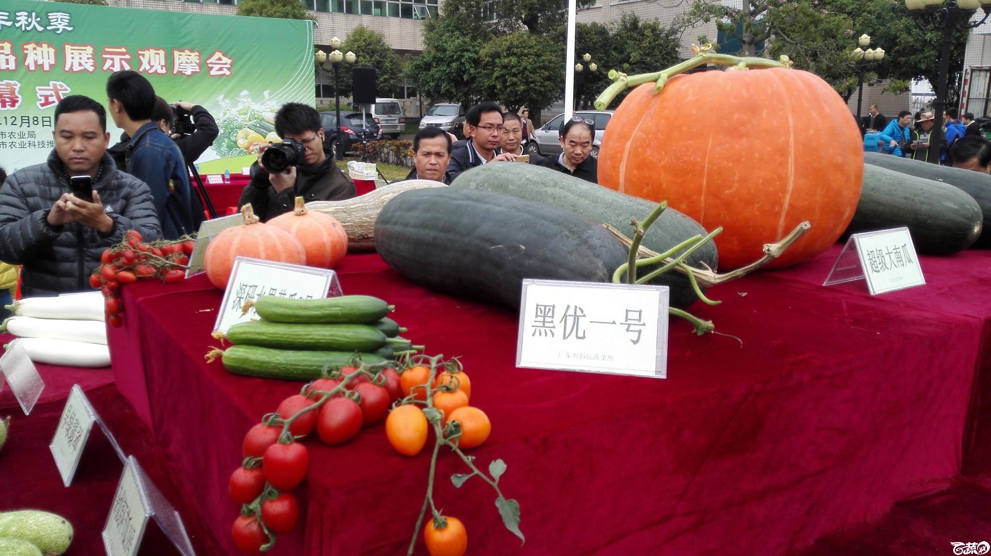 2014年12月8号中山蔬菜新品种展示会_瓜类_010.jpg