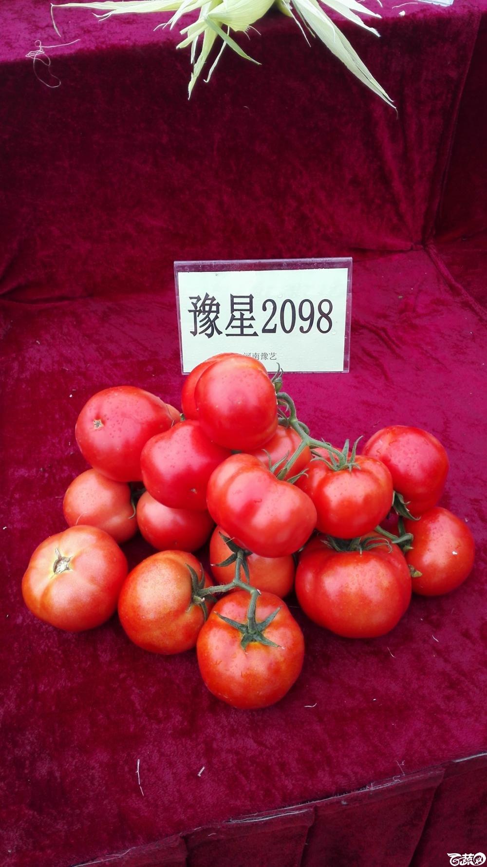 2014年12月8号中山蔬菜新品种展示会_番茄_011.jpg