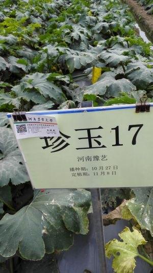 百蔬图,蔬菜图片,一网打尽