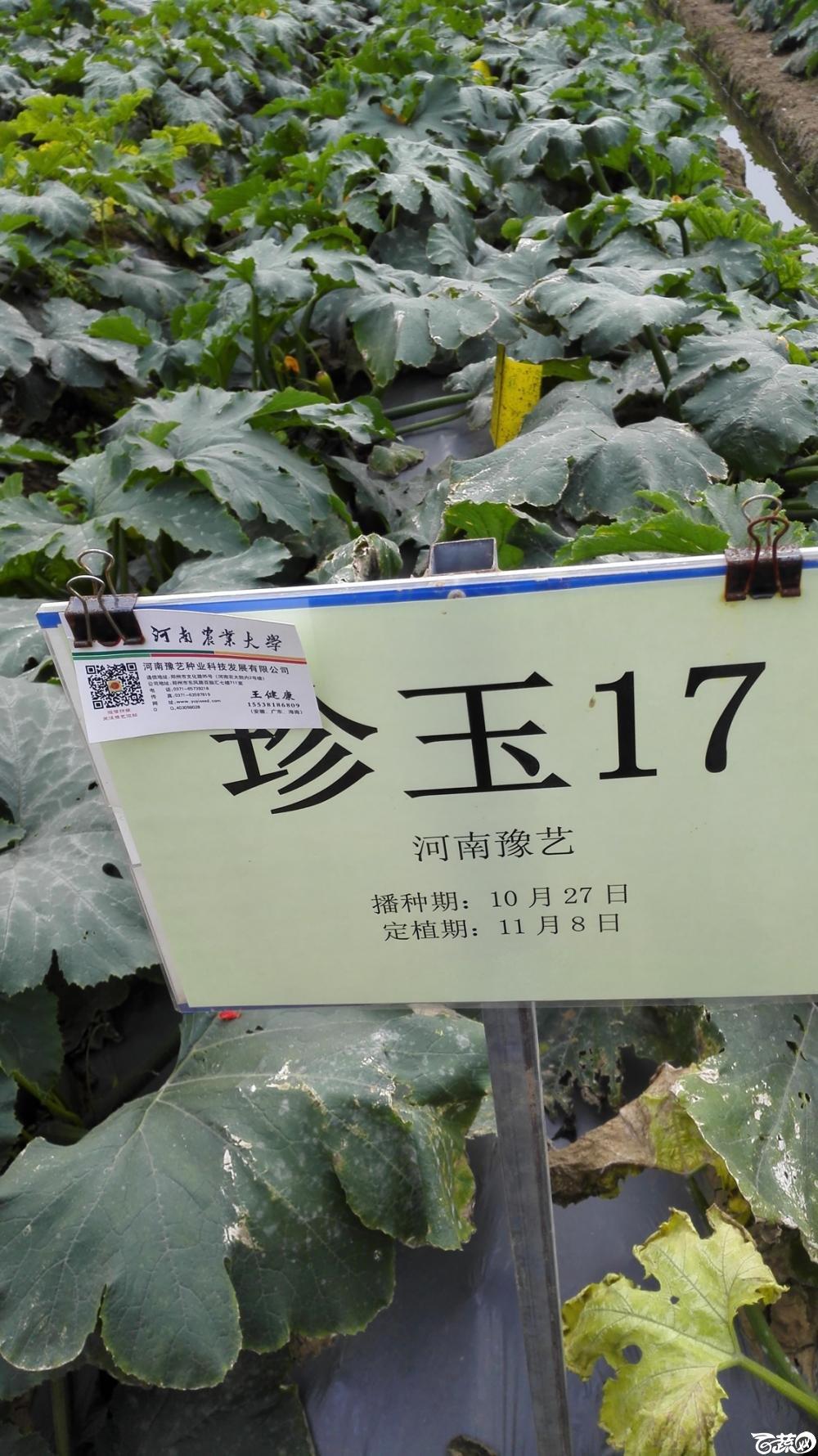 2014年12月8号中山蔬菜新品种展示会_瓜类_011.jpg
