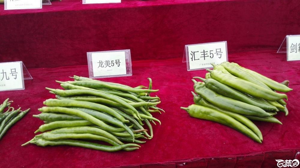 2014年12月8号中山蔬菜新品种展示会_辣椒_011.jpg