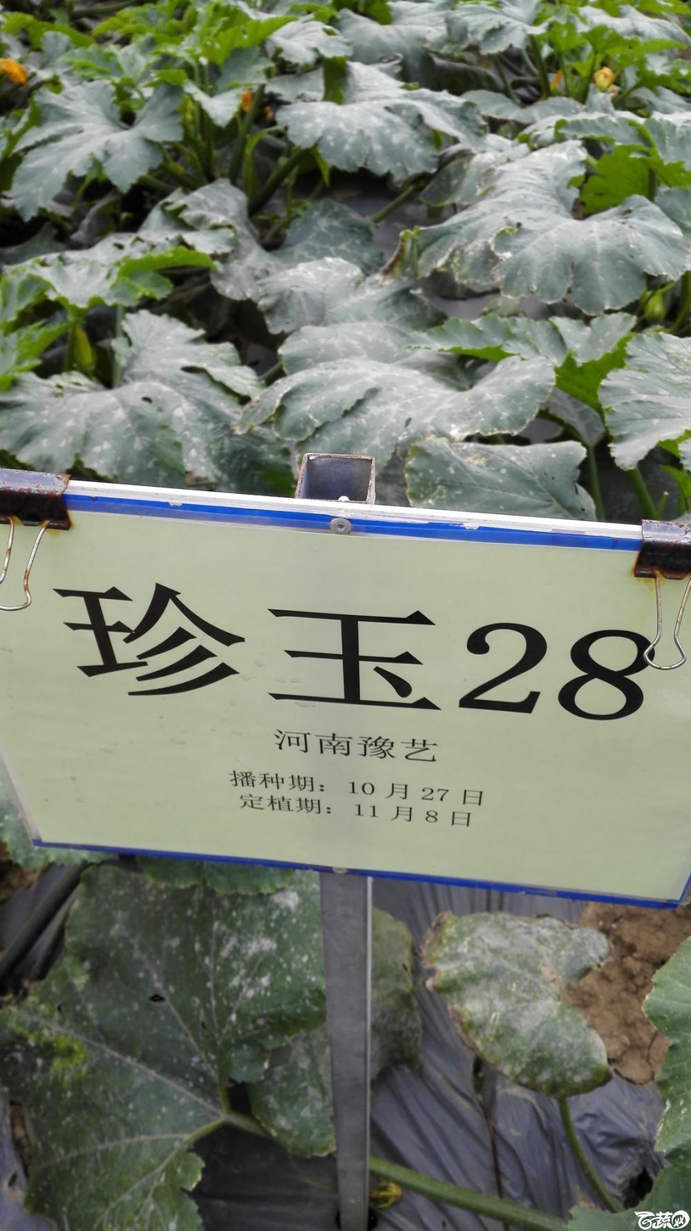 2014年12月8号中山蔬菜新品种展示会_瓜类_017.jpg